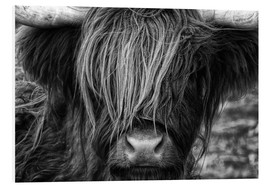 PVC-tavla  Skotsk highland cattle - Martina Cross