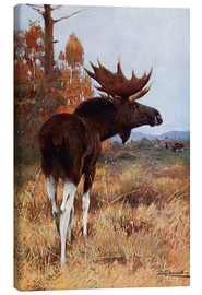 Canvastavla  Elk or Moose - Wilhelm Kuhnert