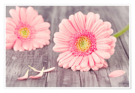 Premiumposter  Gerbera flower bloom - pixelliebe