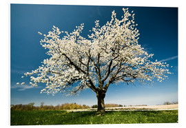 PVC-tavla  Single blossoming tree in spring - Peter Wey