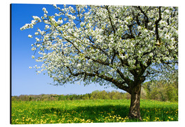 Aluminiumtavla  Blossoming trees in spring rural meadow - Peter Wey