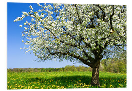 PVC-tavla  Blossoming trees in spring rural meadow - Peter Wey