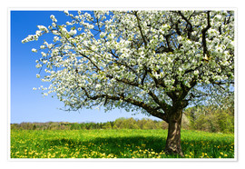 Premiumposter Blossoming trees in spring rural meadow