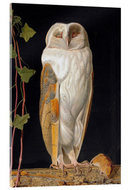 Akrylglastavla  The White Owl - William James Webbe