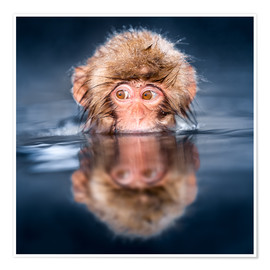 Premiumposter  Japanese Snow monkey bathing - Jan Christopher Becke