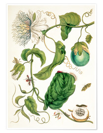 Premiumposter  Passion flower and insects - Maria Sibylla Merian