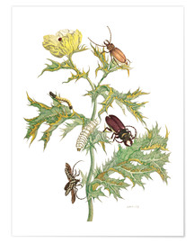 Premiumposter  Mexican Prickly Poppy and longhorn beetles - Maria Sibylla Merian