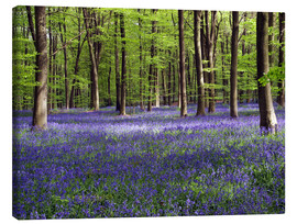 Canvastavla  Bluebells in woodland - Adrian Bicker