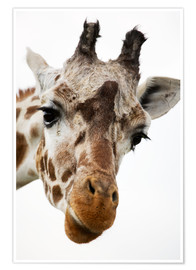 Premiumposter  Giraffe - Power and Syred