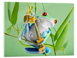Akrylglastavla  Red-eyed tree frog - Linda Wright