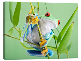 Canvastavla  Red-eyed tree frog - Linda Wright
