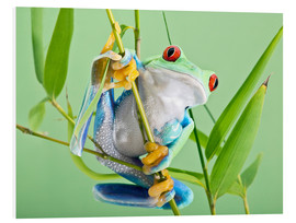 PVC-tavla  Red-eyed tree frog - Linda Wright