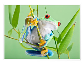 Premiumposter  Red-eyed tree frog - Linda Wright