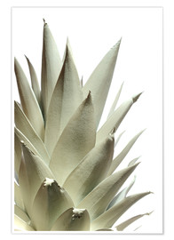 Premiumposter  White pineapple - Neal Grundy