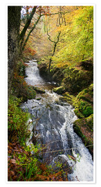 Premiumposter Lynmouth river woodland