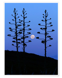 Premiumposter  Full Moon and agave trees - Luis Argerich