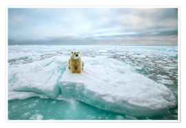 Premiumposter  Polar bear sitting on a ice floe - Peter J. Raymond