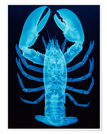 Premiumposter  X-ray of lobster - D. Roberts