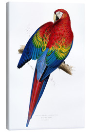 Canvastavla  Red & Yellow Macaw - Edward Lear