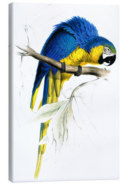 Canvastavla  Blue & Yellow Macaw - Edward Lear