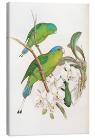 Canvastavla  Philippine Racket tailed Parrot - John Gould