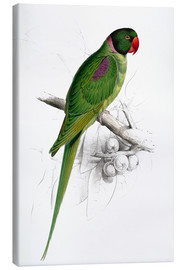 Canvastavla  Hooded Parakeet - Edward Lear