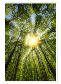 Premiumposter Sunbeams in the forest