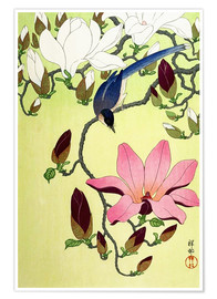 Premiumposter  Magpie with Pink and White Magnolia Blossoms - Ohara Koson