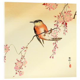 Akrylglastavla  Red Bird and Cherry Blossoms - Ohara Koson