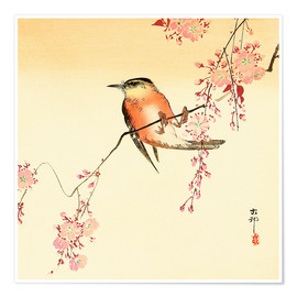 Premiumposter  Red Bird and Cherry Blossoms - Ohara Koson