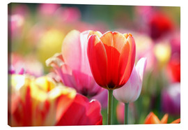 Canvastavla  Beautiful colorful Tulips - Lichtspielart