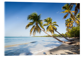 Akrylglastavla  Famous Les Salines tropical beach with palm trees, Martinique, Caribbean - Matteo Colombo