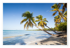 Premiumposter  Famous Les Salines tropical beach with palm trees, Martinique, Caribbean - Matteo Colombo