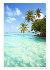 Premiumposter  Turquoise sea and palm trees, Maldives - Matteo Colombo