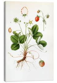 Canvastavla  Strawberry - Carl Axel Magnus Lindman