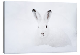 Canvastavla  Mountain hare in winter - Peter Wey