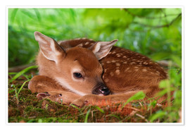 Premiumposter Fawn in the grass