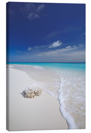 Canvastavla  Coral on white sand beach - Sakis Papadopoulos