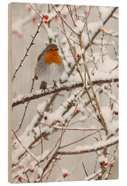 Trätavla  Robin, with berries in snow - Ann & Steve Toon