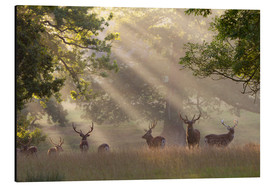 Aluminiumtavla  Deer in morning mist - Stuart Black