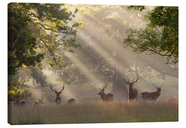 Canvastavla  Deer in morning mist - Stuart Black