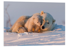 PVC-tavla  Polar bear and cub, Wapusk National Park - David Jenkins