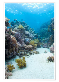 Premiumposter  Coral reef in blue water - Mark Doherty