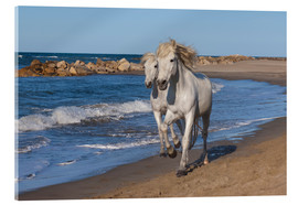 Akrylglastavla  Camargue horses on the beach