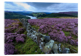 Akrylglastavla  Heather covered Bamford Moor and dry stone wall - Eleanor Scriven