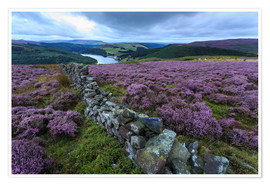 Premiumposter  Heather covered Bamford Moor and dry stone wall - Eleanor Scriven