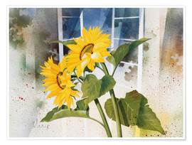 Premiumposter  Sunflowers - Franz Heigl