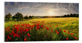 Akrylglastavla  Poppy Field - Michael Rucker
