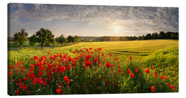 Canvastavla  Poppy Field - Michael Rucker