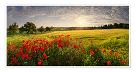 Premiumposter Poppy Field